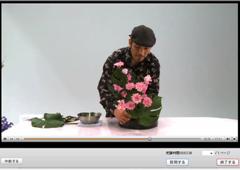 いける花は動画と同じものを使用しなければいけないのでしょうか。