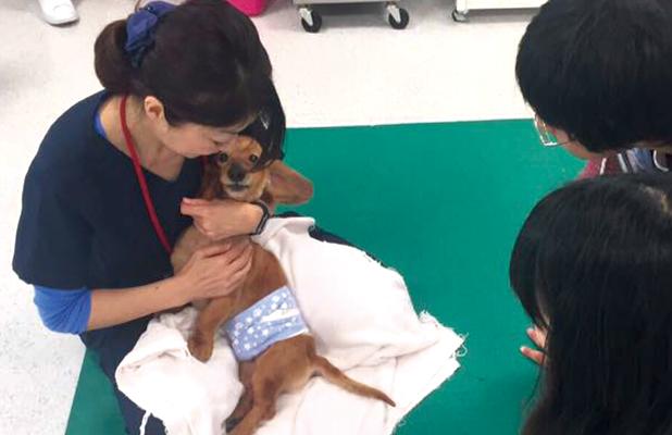 熊本地震の際に飼い主さんと獣医師をつなぐ役割として活躍!